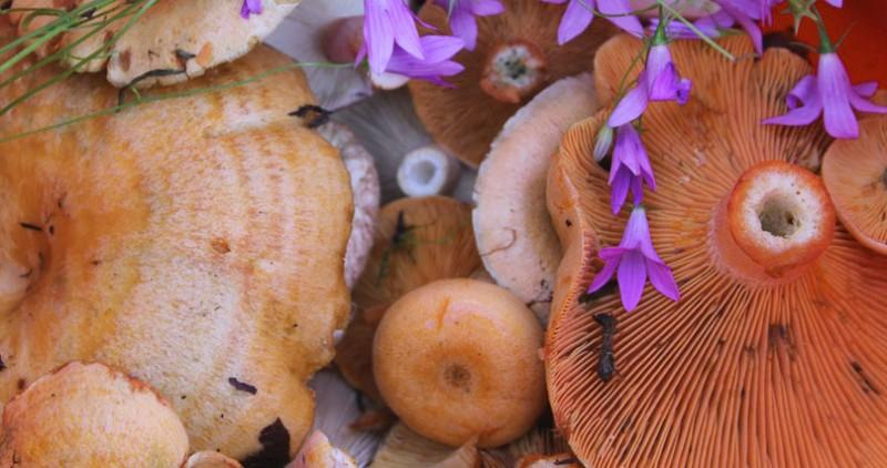 рыжики грибы-афродизиаки